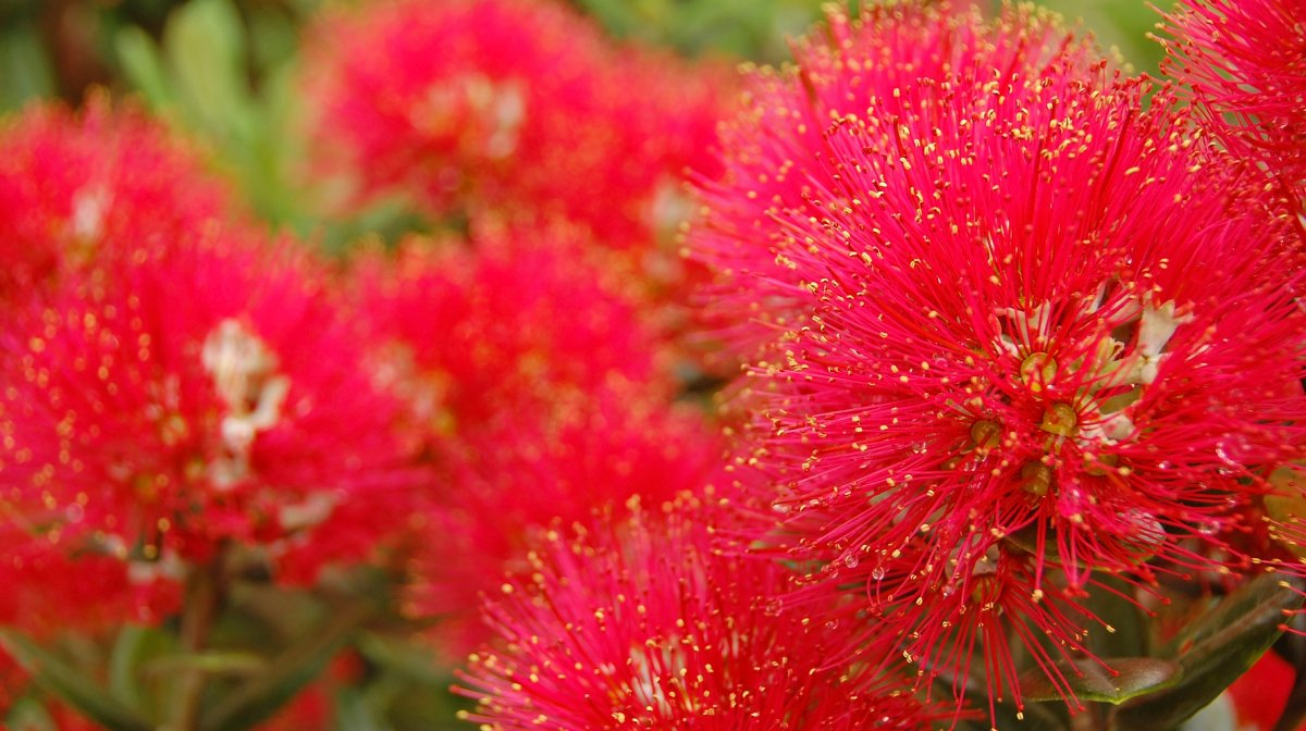 How To Achieve Youthful Skin With New Zealand Botanicals   Antipodes UK