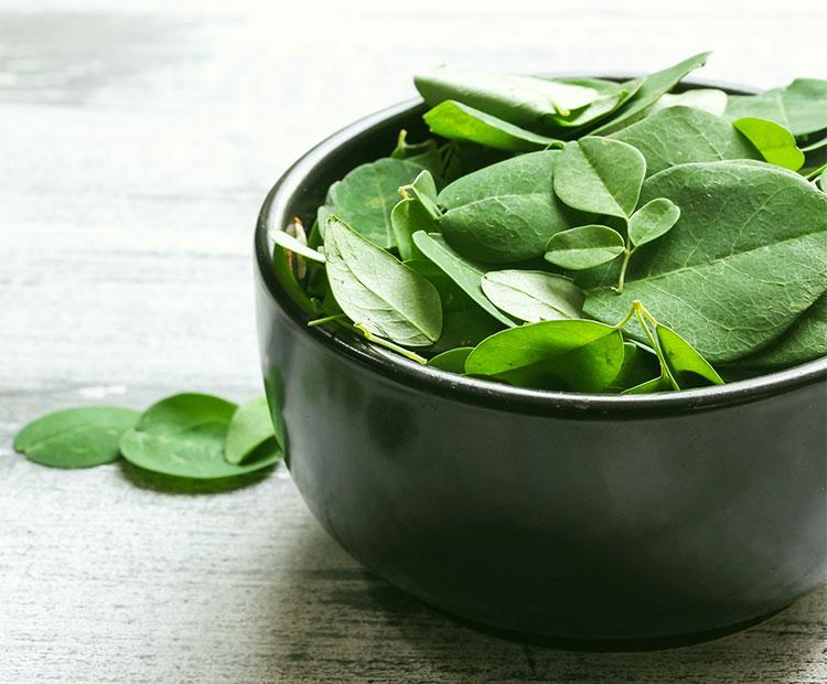 Moringa Skin Benefits - Dermstore Blog