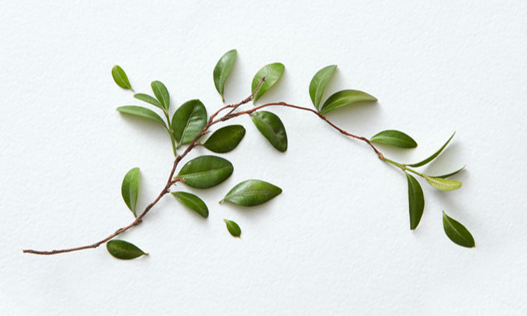 What Is Tea Tree Oil Good For? (Plus, Top 9 Recommendations)