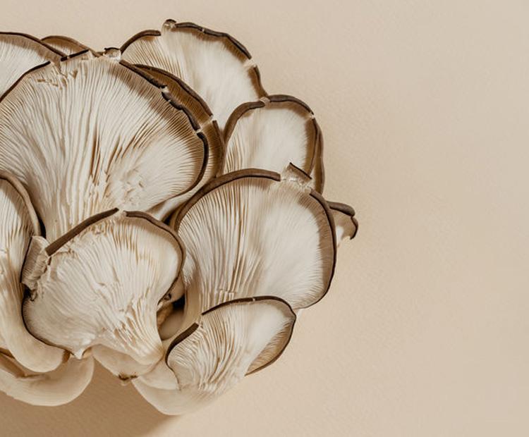 Mushrooms - the skin & health benefits of mushroom