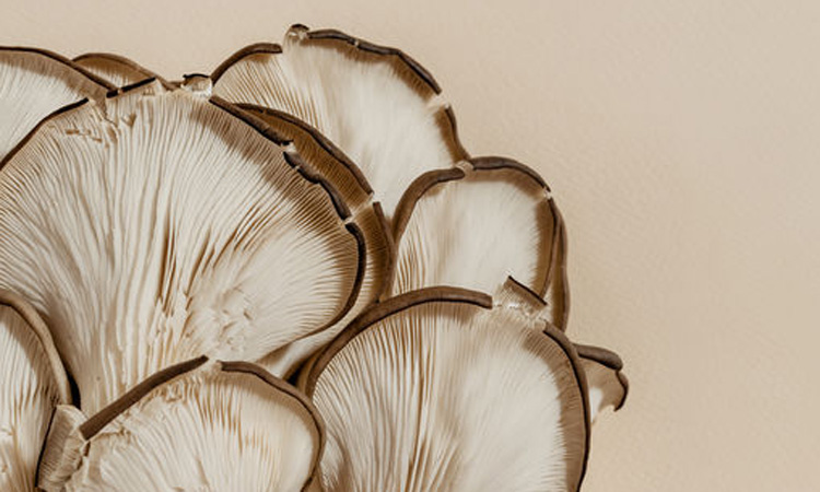 Why Mushroom Should Be Your New Favorite Skin Care Ingredient