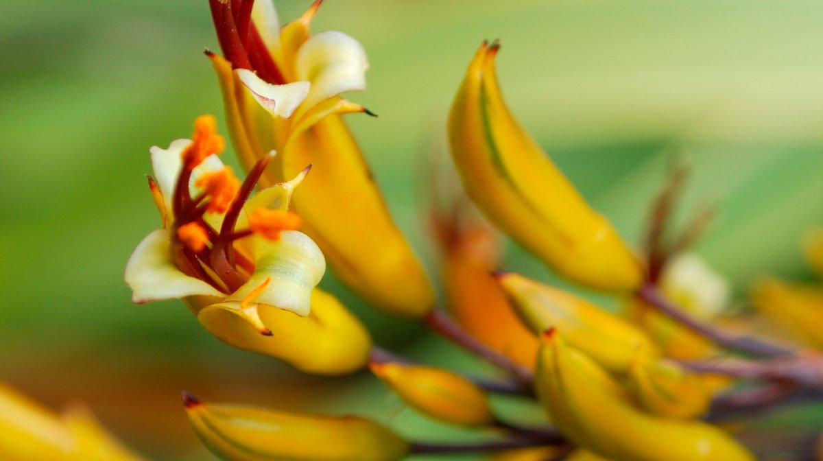 How To Achieve Youthful Skin With New Zealand Native Botanicals
