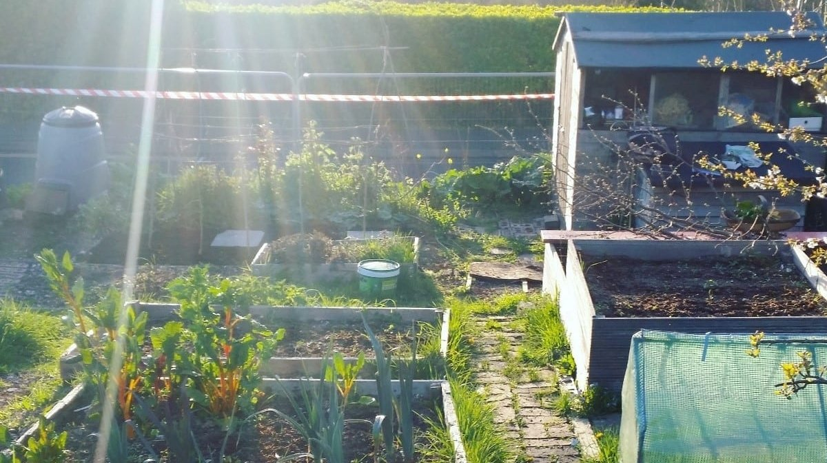 My Allotment Adventure