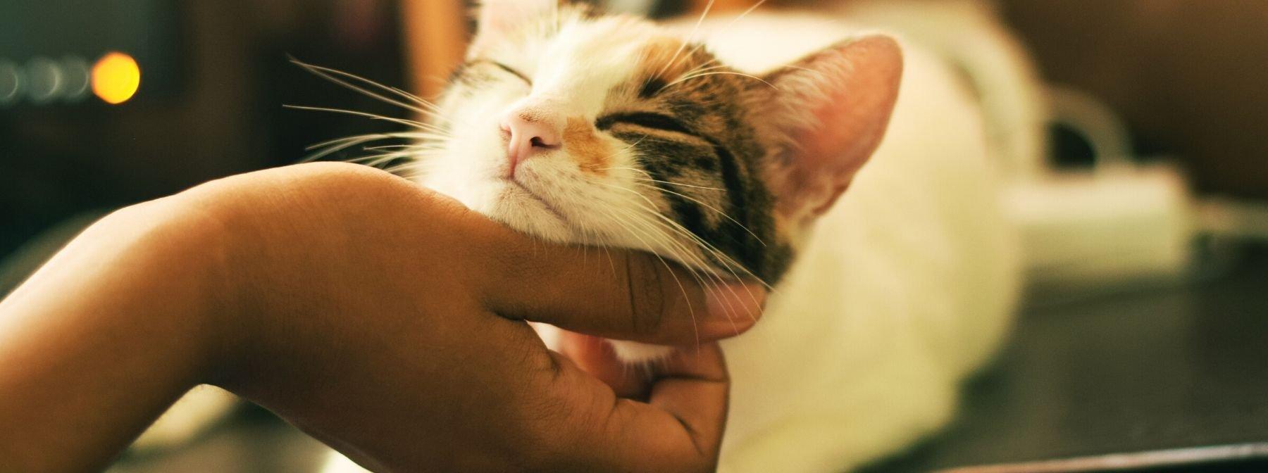 4 Human Behaviors Cats Really Love