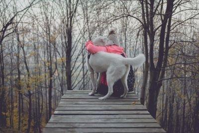 dog walk in forest