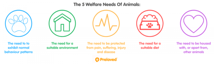 The 5 Welfare Needs