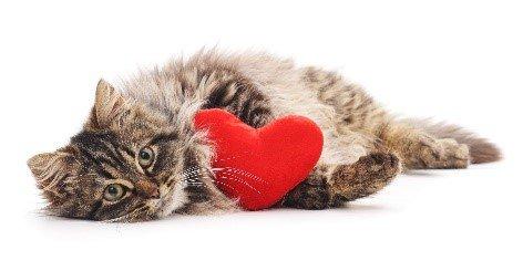 cat's used toy