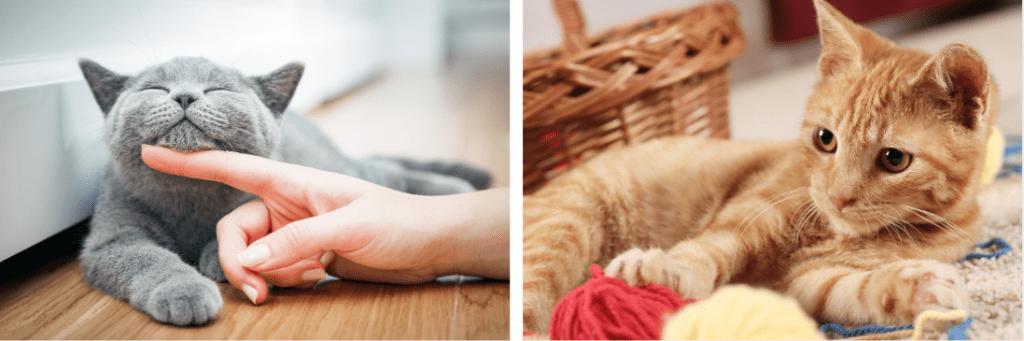 shropshire cat network