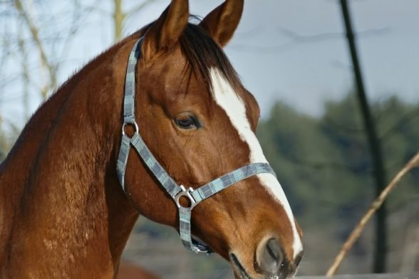 Easy Horse Riding Tips for Spring