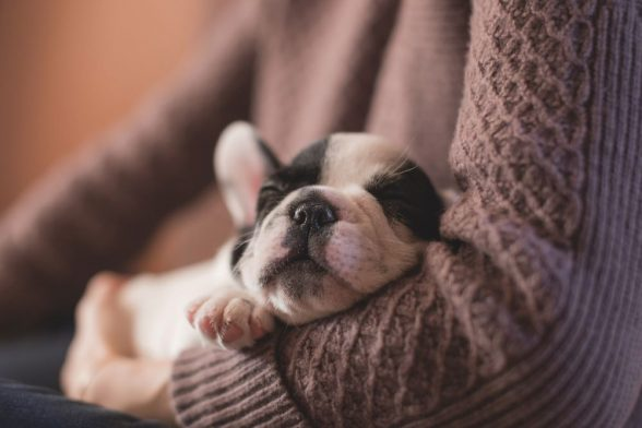Separation Anxiety in Dogs- Advice for Pet Owners