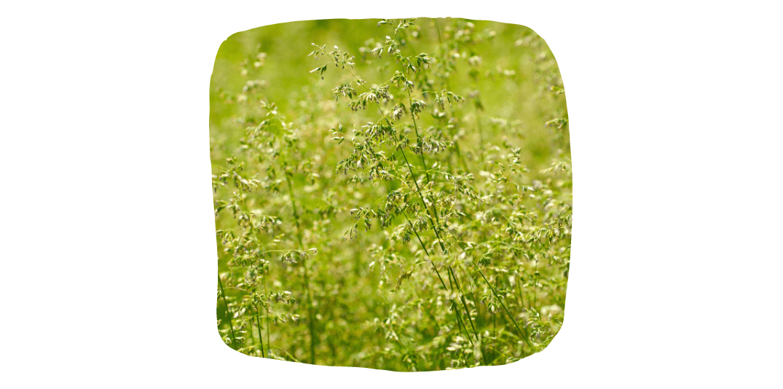 weeds in horse pasture