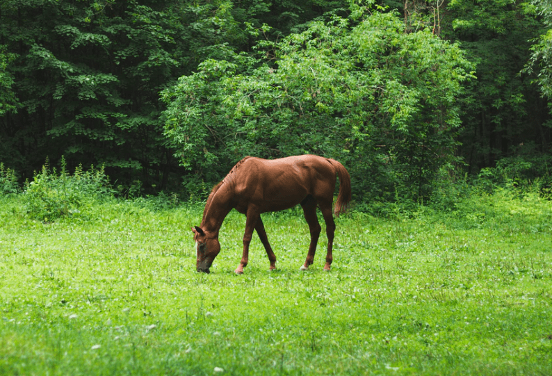 How to Keep a Healthy Horse Pasture