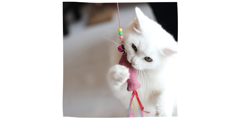 cat with fish toy