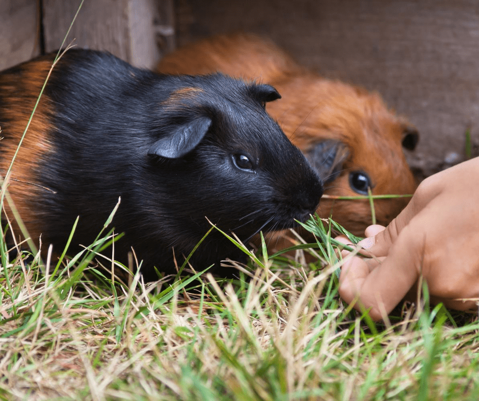 5 Budget-Friendly And Low Maintenance Small Pets
