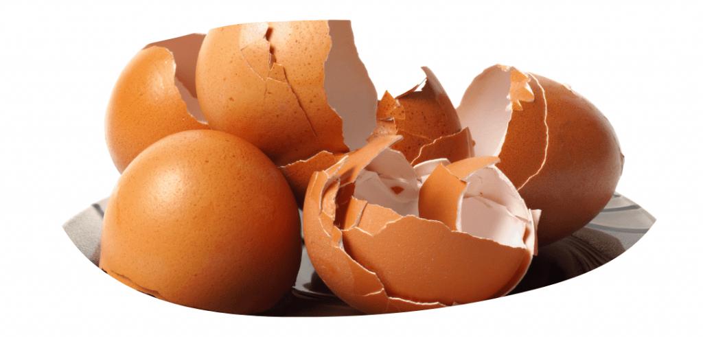 egg shells food scraps