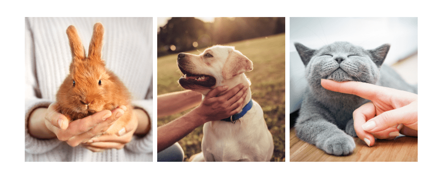 minimum listing price for pets on preloved