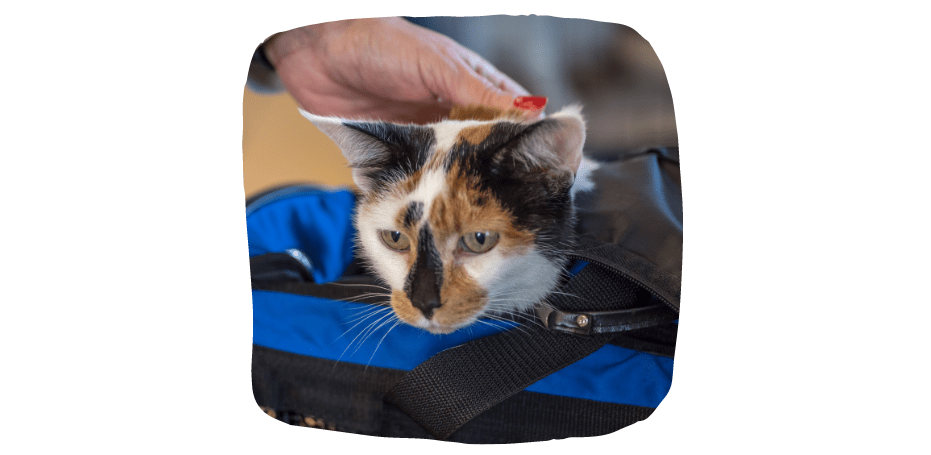 moving abroad with your pet