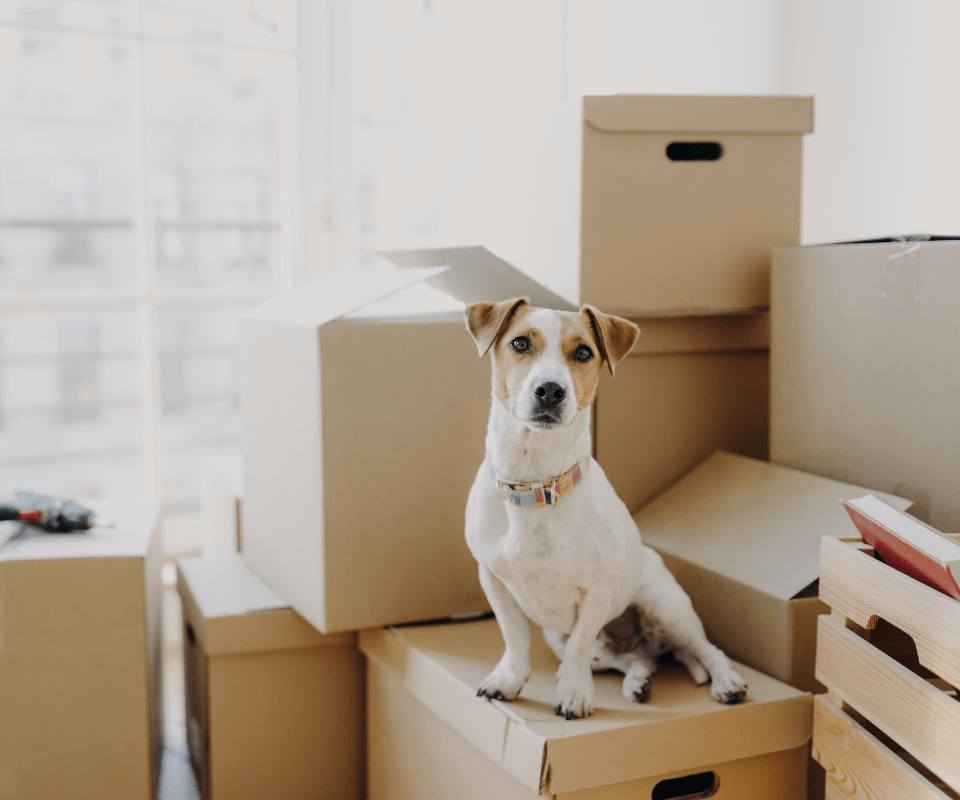 What To Do When Moving Abroad With Your Pet