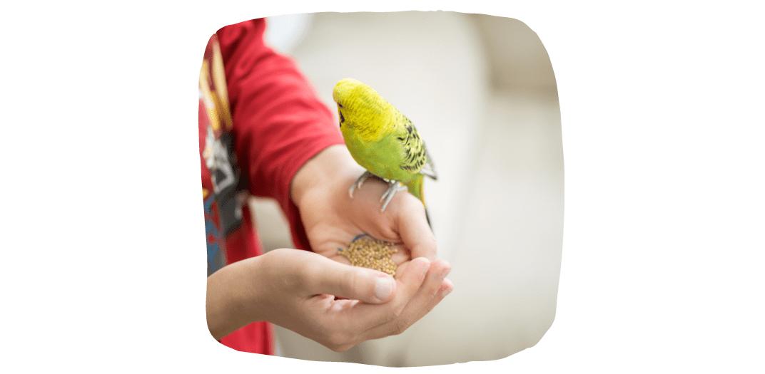 feeding pet parrots