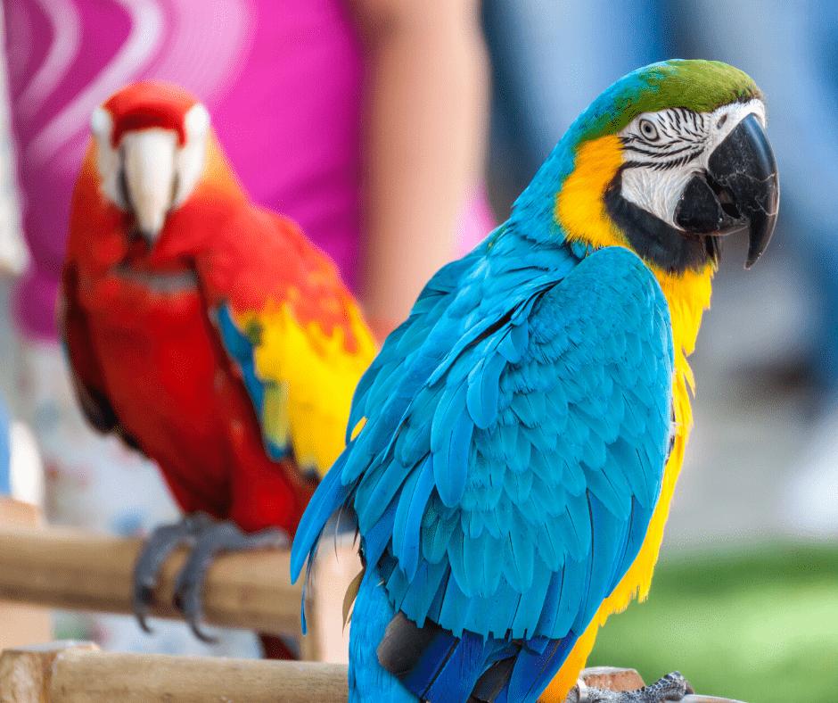 5 CommonBehaviouralProblems in Pet Parrots