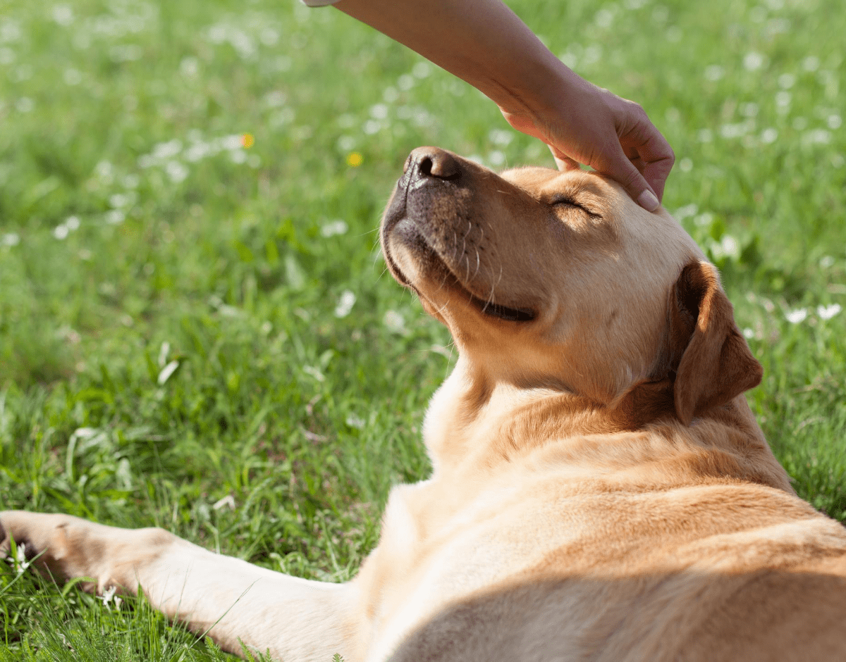 Home Visits: What Do Rescue Shelters Look For?