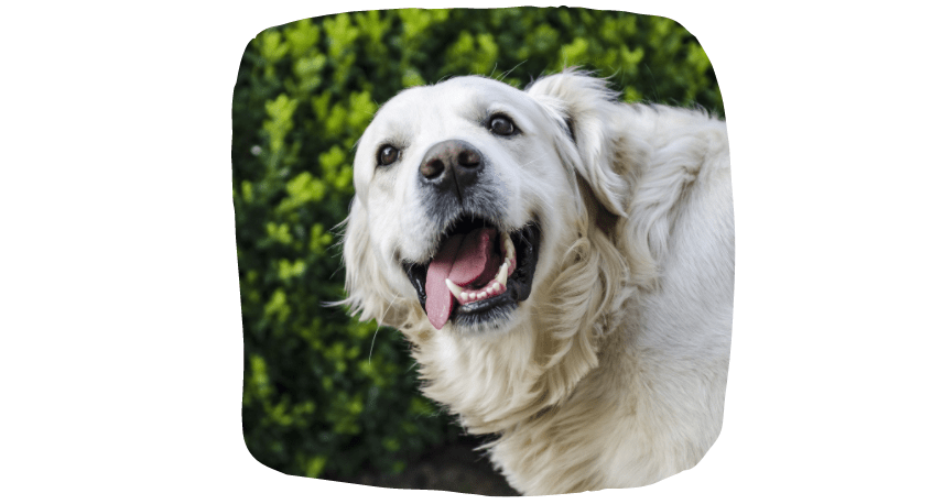 home visits for dogs