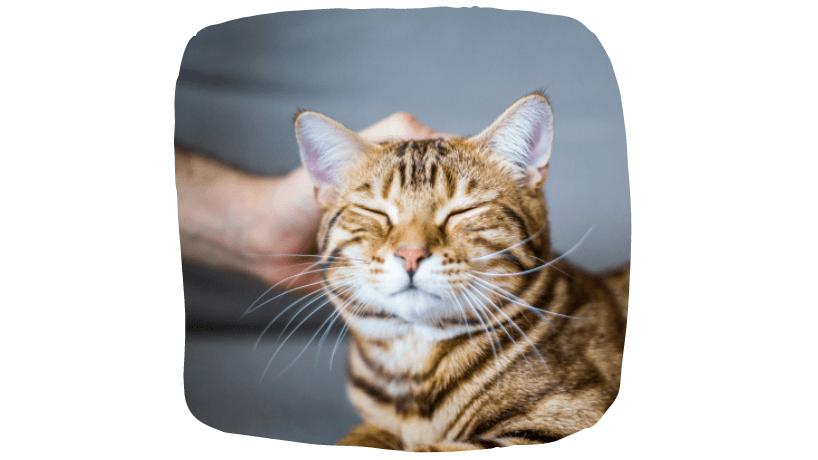 kitten home visits