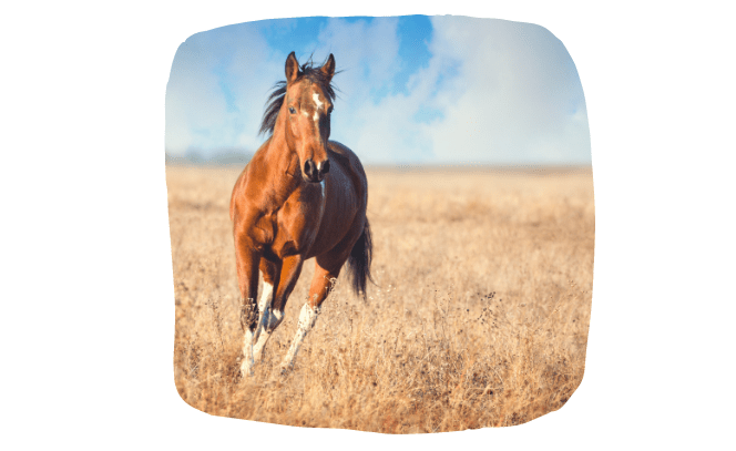 equine microchipping