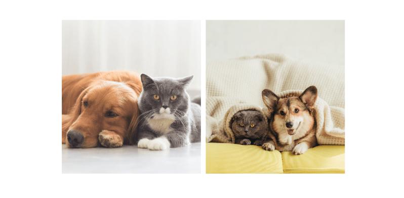 pet rehoming crisis