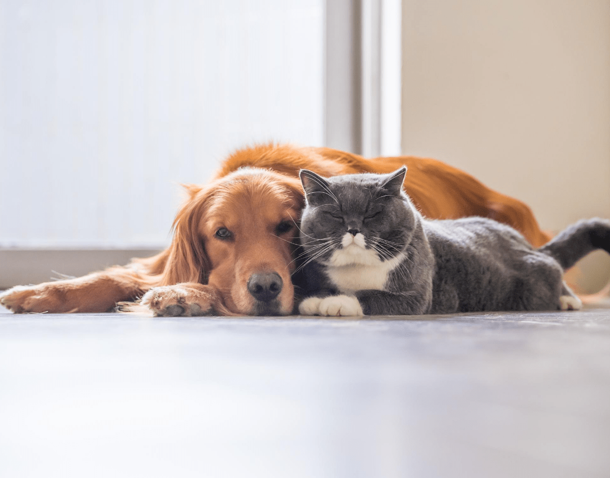 Has The Pandemic Triggered A Pet Rehoming Crisis?