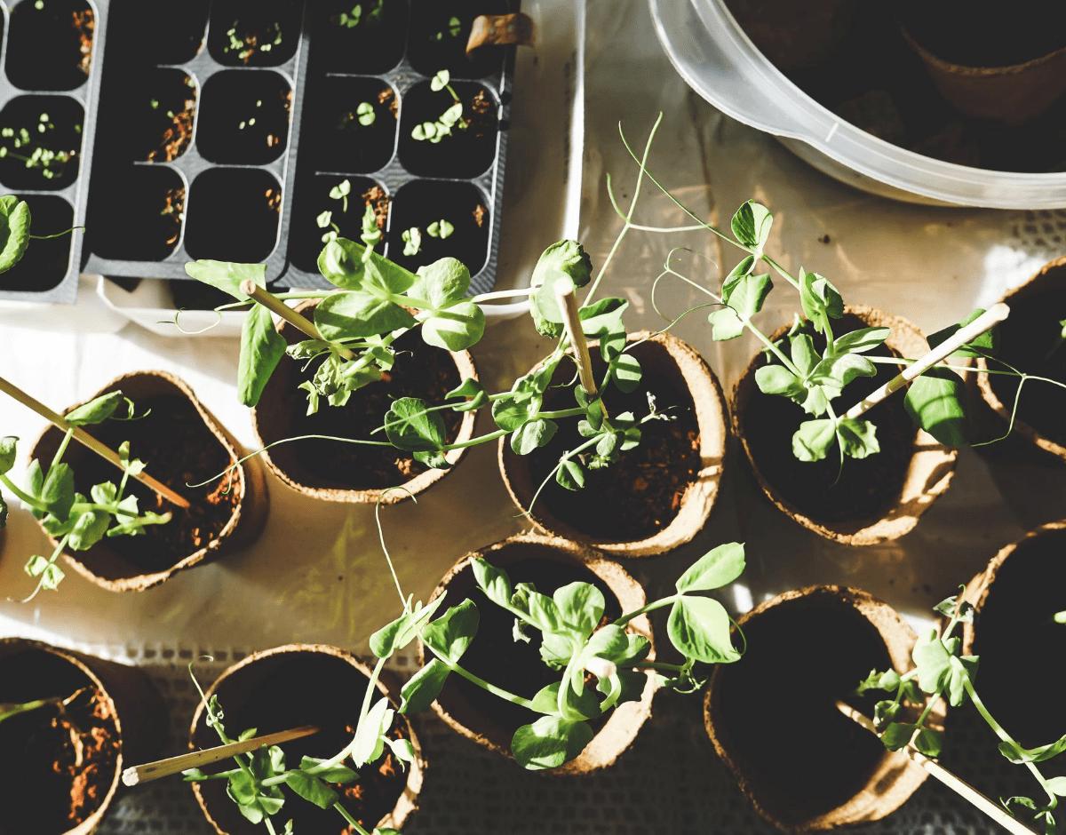 How To Create A Home Vegetable Garden