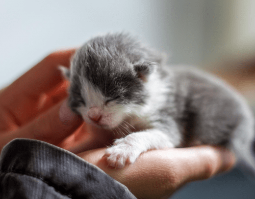 The Developmental Stages Of A Kitten: A Guide By Preloved