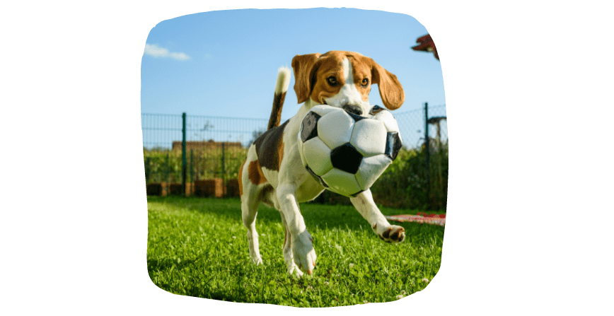 keeping your dog busy