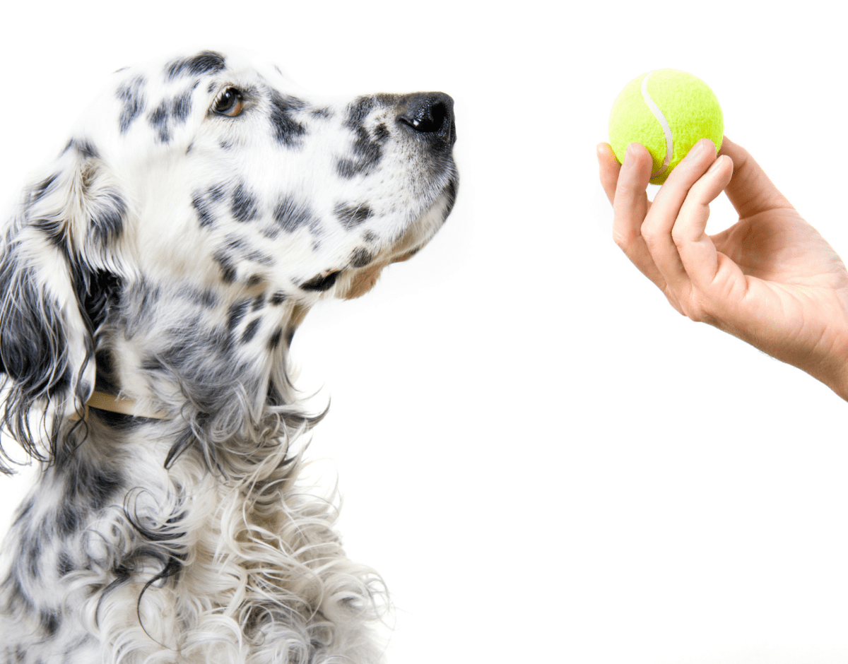 8 Effective Ways to Keep Your Dog Busy Indoors