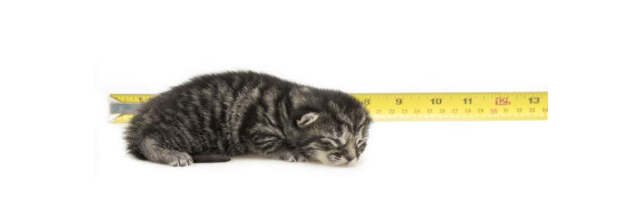 developmental stages of a kitten week 1