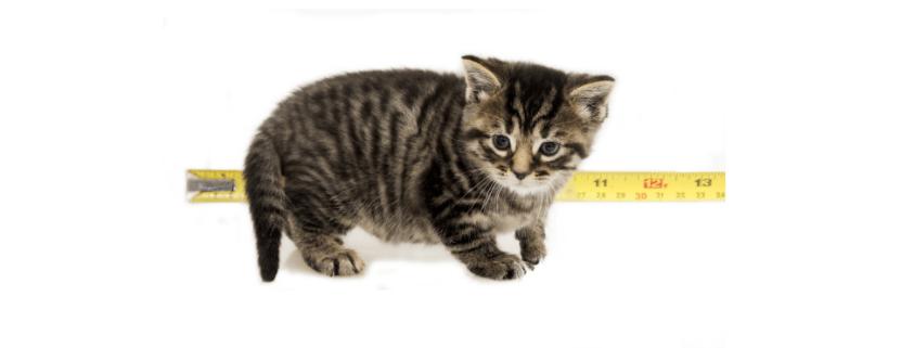 developmental stages of a kitten week 4