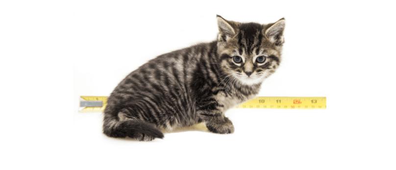 kitten at 5 weeks