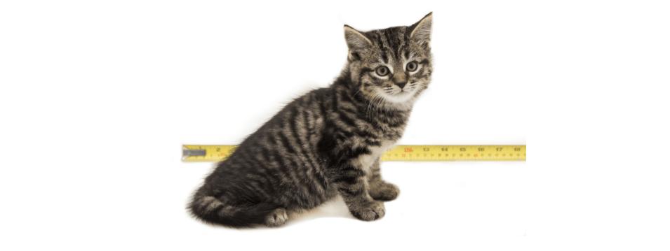 kitten at 7 weeks