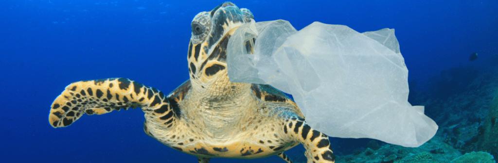 turtle eating plastic carrier bag
