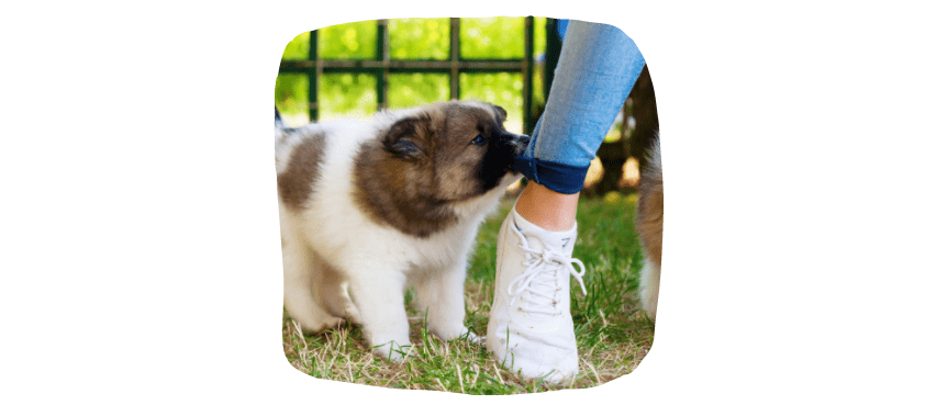 biting and nipping: how to train your puppy.