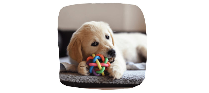 dog chewing toy whilst teething