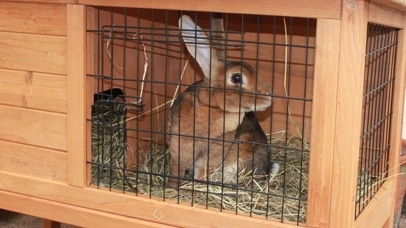 Preloved Restricts The Sale Of Small Rabbit Hutches