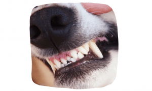 oral health for your dog