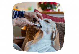 cleaning your dogs teeth