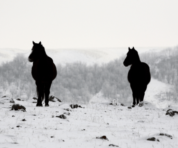 How To Manage Horse Pastures During Winter
