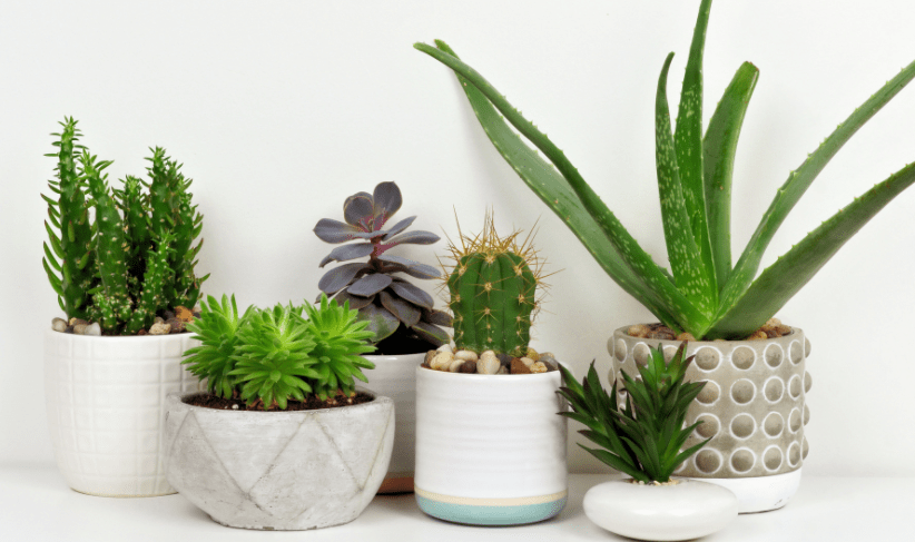 House Plants To Keep Away From Your Dog