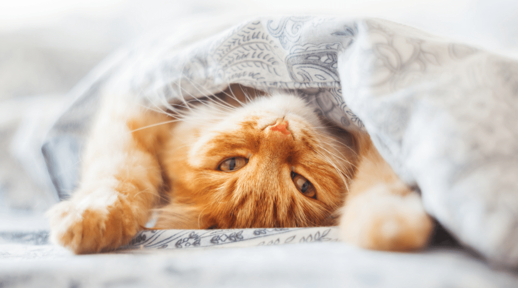 6 Unique Cat Behaviours And What They Mean