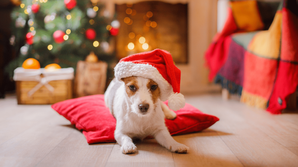 How To Keep Your Pets Safe During Christmas