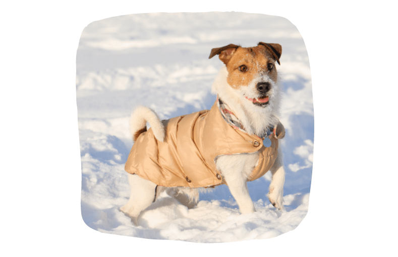 Keep Your Pets Safe During Christmas - Dog waterproof or coat