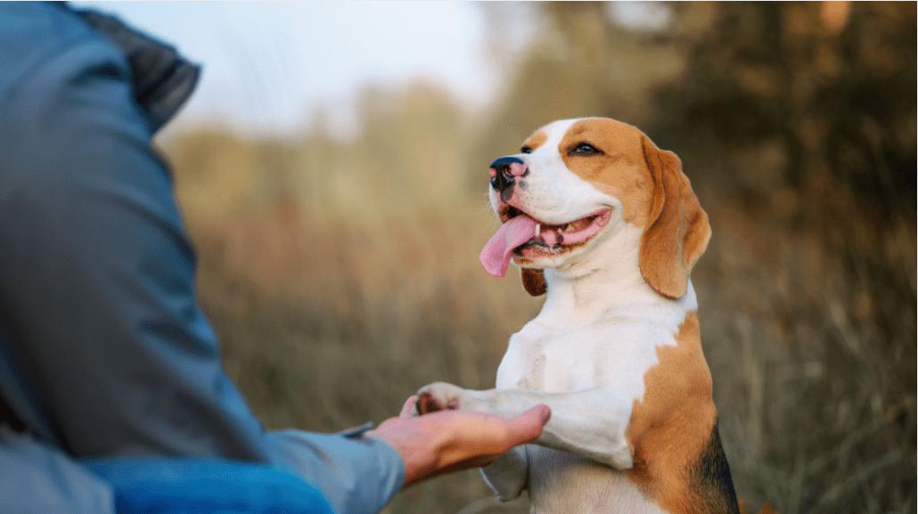 Dog Training Hand Signals: The Basics
